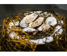 plate_oysters_928597145