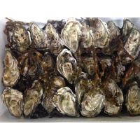 oysters_box_2094505908